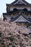 Rear facade of the donjon and sakura