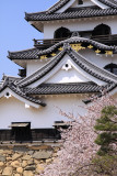 Front donjon facade and cherry blossom