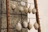 Pufferfish souvenirs, Fuchū
