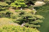 Heron atop a sculpted tree, Ritsurin-kōen