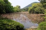 Reedy Gun-o-chi Pond