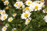 Flowers outside the Uzu-no-michi
