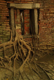 Banyan roots climbing through a bricked-in window