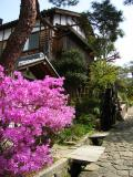 Spring flowers in Magome