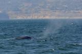 Blue Whale 1.