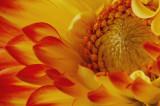 Studio Shot-flower