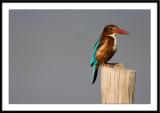 Birds in Thailand 2009