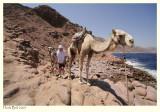 Guiding a Camel
