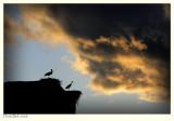 Storks on the El Badi Palace