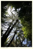 Jardin Majorelle - I