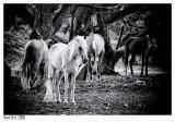 Horses - Pferde - Paarden - Chevaux