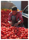Tomatoes - Cheap and Tasty