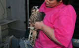 Peregrine Chick...Vesper (female)