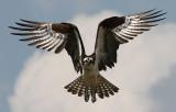 Raptors...the Sky Masters