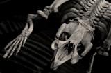 Skeletal IMGP2606.jpg