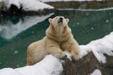 Ahhhhh. Polar Bear IMGP2815