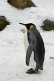Penguin IMGP2517.jpg