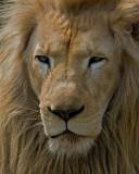White Lion IMGP1444.jpg
