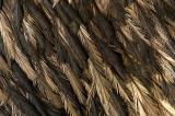 Emu IMGP2979.jpg