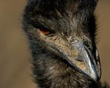 Emu IMGP2991.jpg