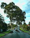 Kelmarna Avenue in Herne Bay