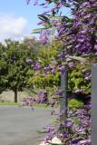Purple at Matua Valley Wines