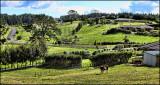 Waimauku countryside
