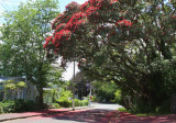 Red Road from the Pohutukawa Flowers