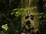 nature_et_paysage