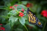 Mariposa Amarillo