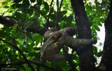 Slow Down Sloth