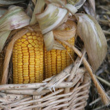 Corn Stalk Basket