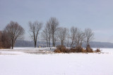 Marsh Creek in Winter