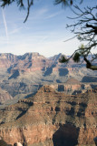 Grand Canyon with Branches