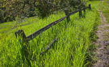 002_Fence and glowing grass on Javelina__8328`1003261347.jpg