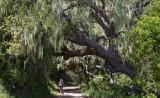 006_Dee under oak with lichen__9070`1004171224.jpg