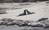 019_Elephant seals on the North Point beach__1045`1006231343.jpg