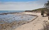 020_Elephant seals on the North Point beach__1055`1006231403.jpg