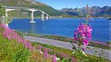 Bridge Over Fjord, Lofotens