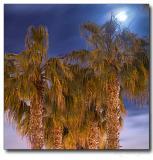 Full moon over palm-trees, Coronado Island, San Diego