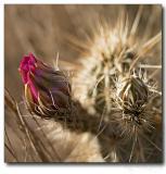 Cactus, desert along I17 highway