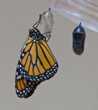 Monarchs born September 3 2010
