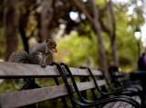 Super Squirrel :-)
