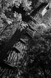 Tree Ladder with Topcon 58mm 1pt4.jpg