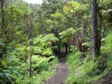 hawaii_volcanoes_national_park