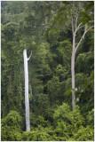 Jungle at Kbal Speam