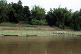 Growing vegetables on the bank of the Mekong