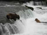 July 12-13, 2010 - Katmai National Park