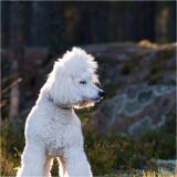 28/11 Bonnie enjoying off leash time