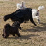 Catch me if you can!!!